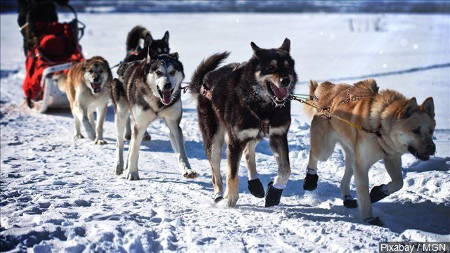 Officials in the Iditarod Trail Sled Dog Race say a person on a snowmobile early Saturday morning purposely struck two teams in the race.