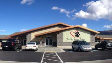 An Idaho animal shelter will close for a cleaning day after a feline disease caused six cats to be euthanized and about 20 others to be quarantined. Photo: Pocatello Animal Shelter/Facebook