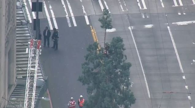 A man who perched near the top of an 80-foot sequoia tree in downtown Seattle for a day was ordered held on $50,000 bail.