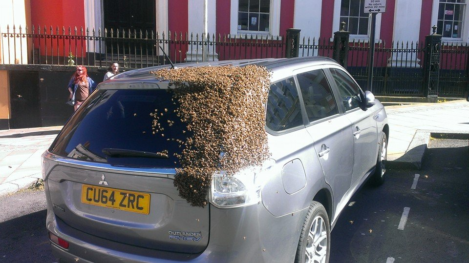 The swarm of bees in West Wales (PHOTOS: Tom Moses/Facebook)