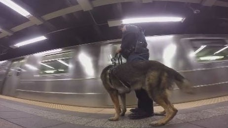 K9 Zane and his handler. Photo: NYPD/Facebook