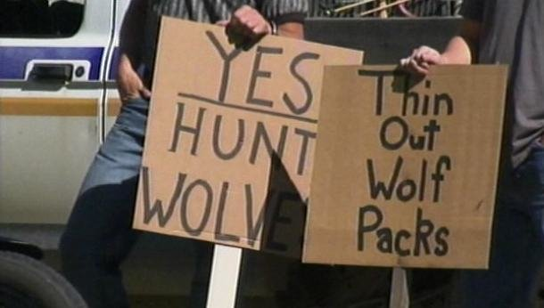Demonstrators hold signs showing support for wolf hunts at Friday's rally in Cd'A
