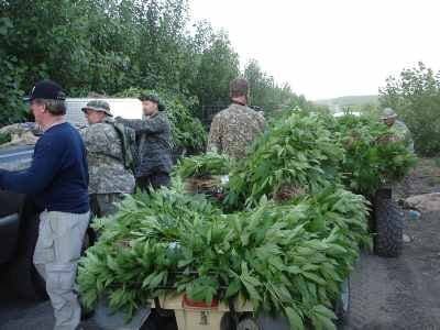 Officers seize an estimated 40,000 plants from a grow near Burbank