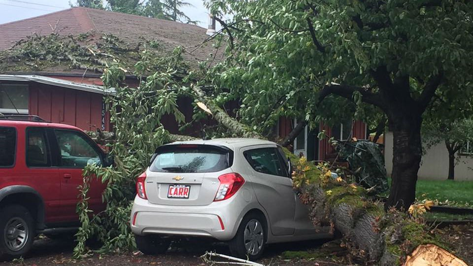 Trees and power lines are coming down as a powerful storm hits the Northwest. Photo: Tualatin Vally Fire and Rescue