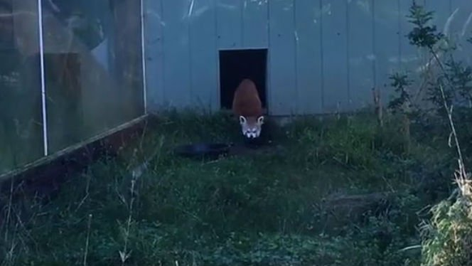 Photo: Facebook/Firefox