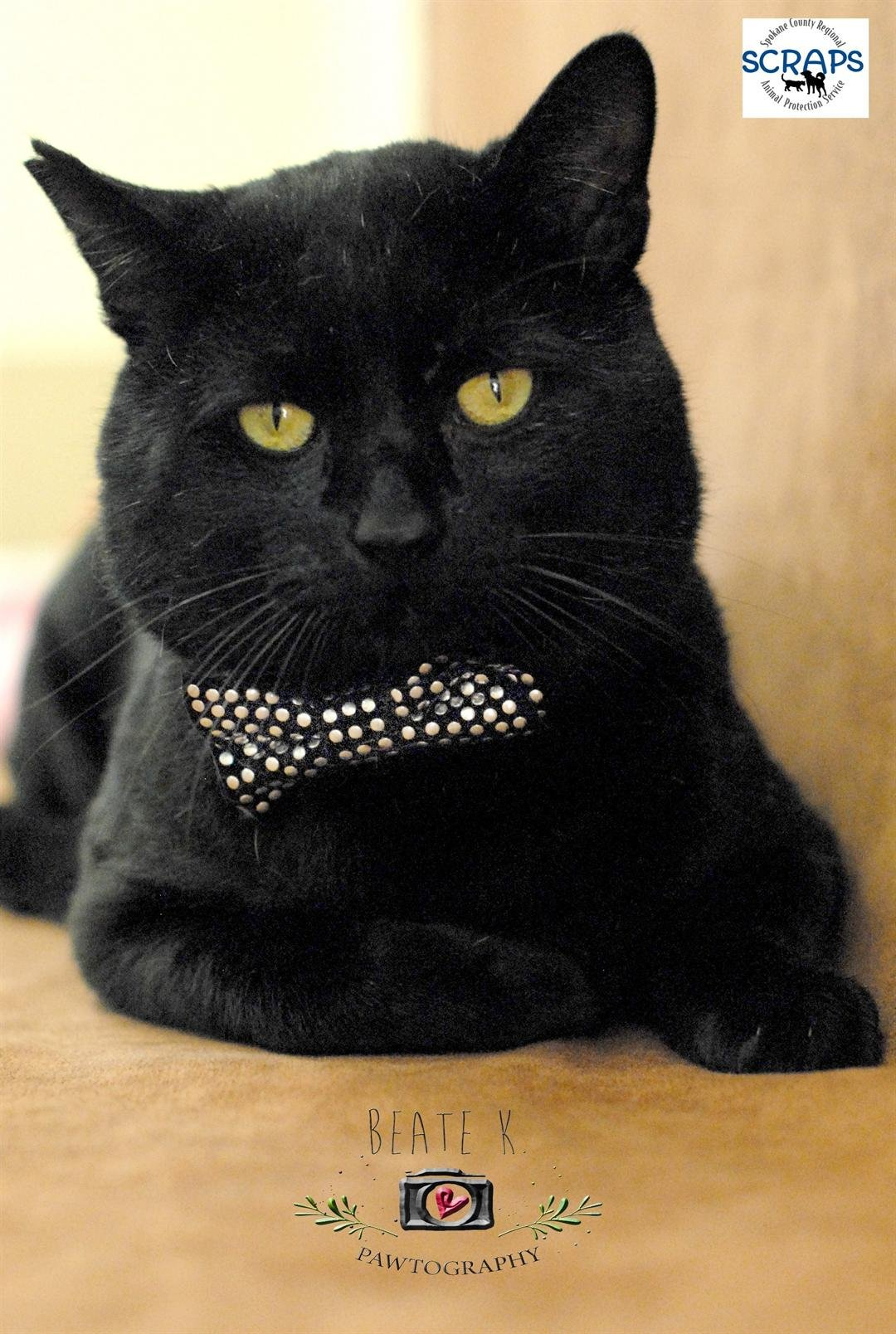Oliver the bowtie-wearing cat.