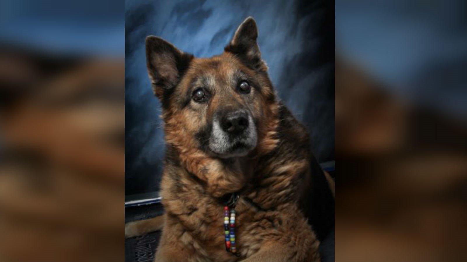 CD the dog's school picture. RIP, buddy.