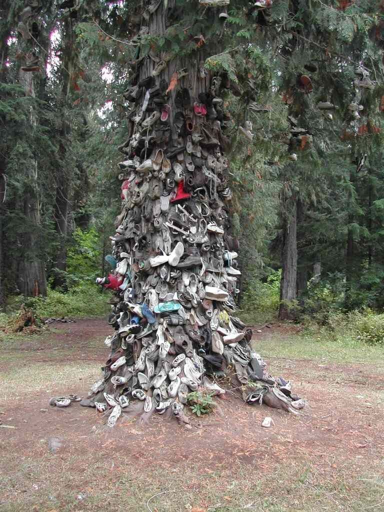 Shoe Tree Before Fire