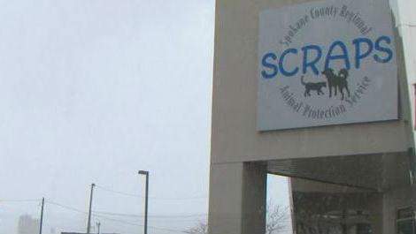 SCRAPS confirms person of interest in cat torture case
