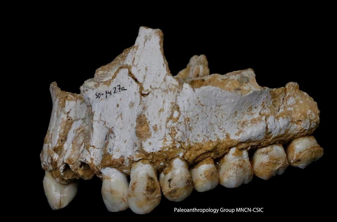 This Neanderthal was eating poplar, a source of aspirin, and moulded vegetation including penicillium fungus, a source of natural antibiotic. Photograph: Paleoanthropology Group MNCN-CSIC