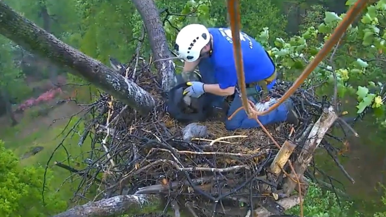 Photo/Video: American Eagle Foundation