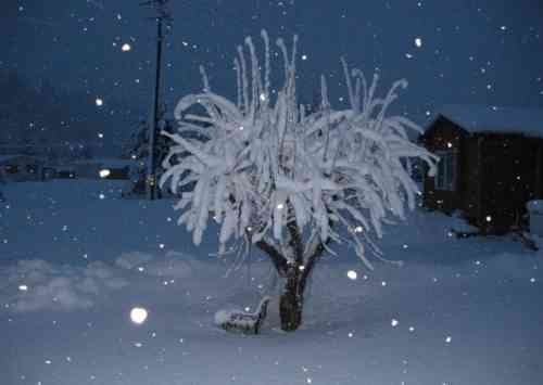 © Weeping apple tree in Osburn, ID uploaded to our KHQ Facebook wall
