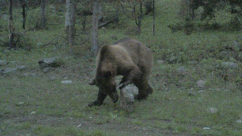 Montana Fish, Wildlife and Parks Region 4