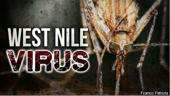 West Nile virus found in metro-Detroit mosquitoes