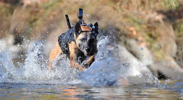 Dog Body Armor Customized Body Armor That
