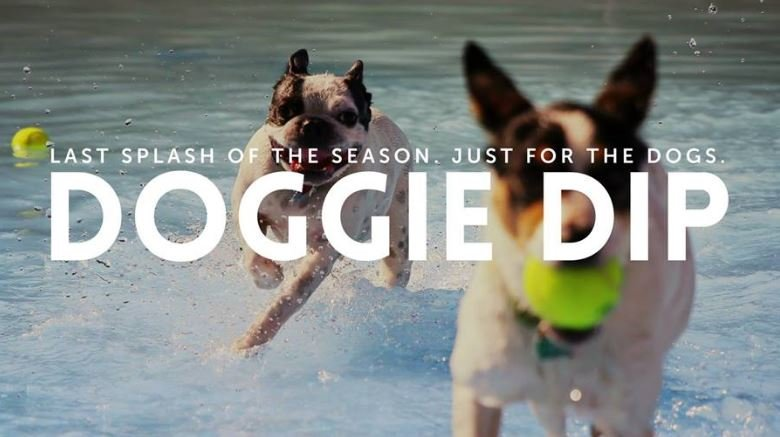 Doggie Dips 39 Happening This Week In Spokane At City Pools Nbc Right Now Kndo Kndu Tri Cities