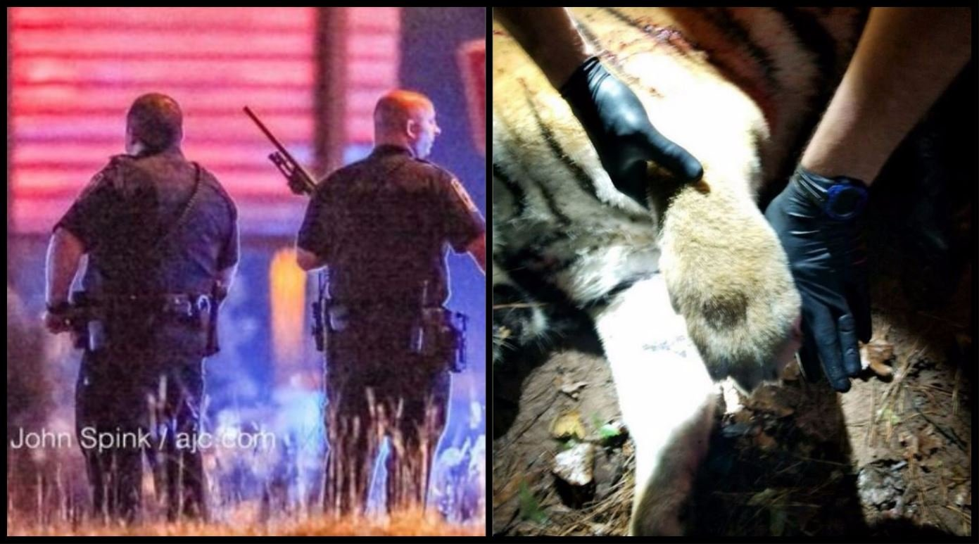 A tiger shot dead by police in Atlanta after getting loose in a populated Atlanta neighborhood.