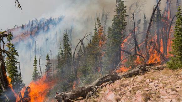 Rice Ridge Fire, Inciweb