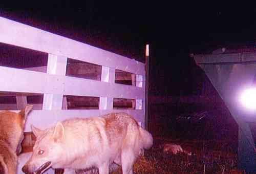 barbara walters dog. Did Barbara Walters Just SAY