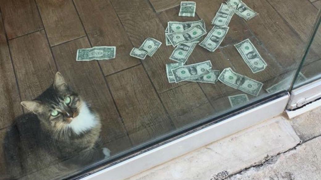 Cat Raising Money for the Homeless