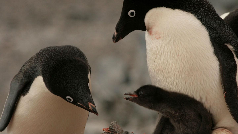 Photo: WWF-Australia