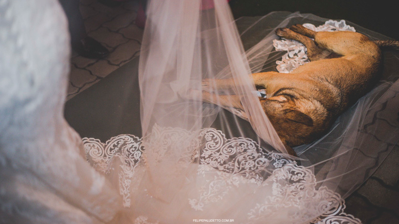 Newlyweds adopt stray dog after he crashes their wedding