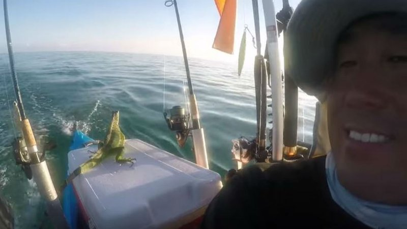 Watch florida kayaker rescues iguana swept out to sea for Key west kayak fishing
