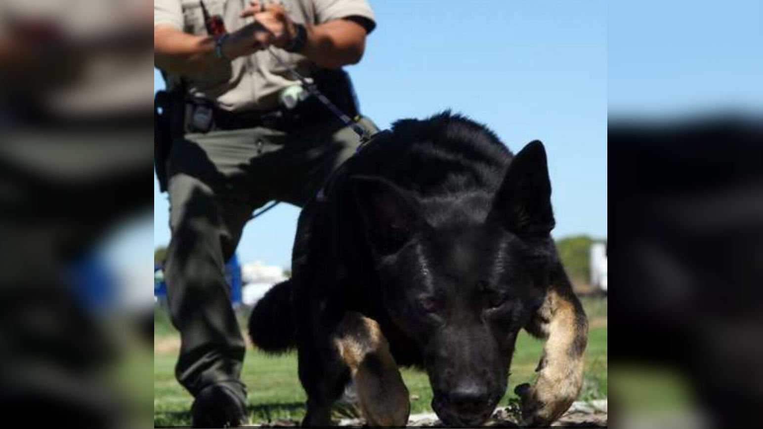 K9 Grizzly helps catch teen wanted for kidnapping, robbery near George