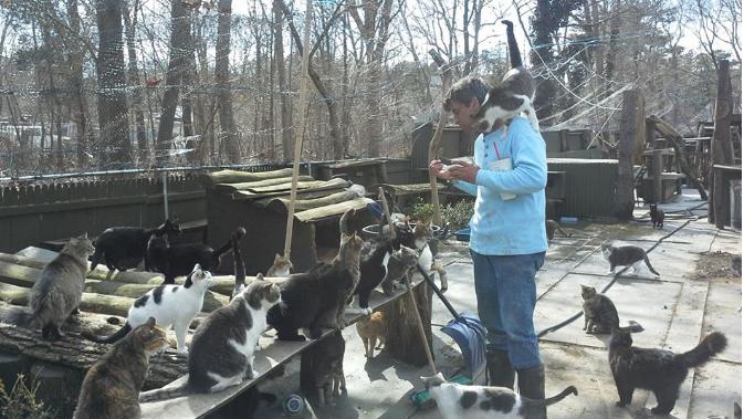 Happy Cat Sanctuary Facebook