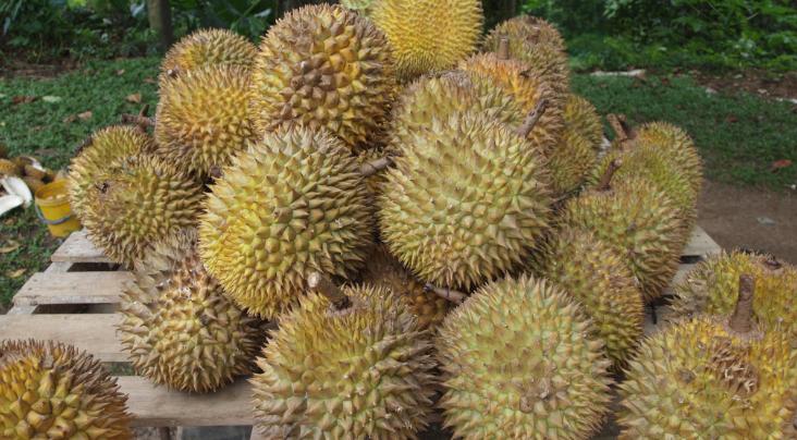 Durians (PHOTO:  Creative Commons Attribution-Share Alike 3.0 Unported/Kalai)