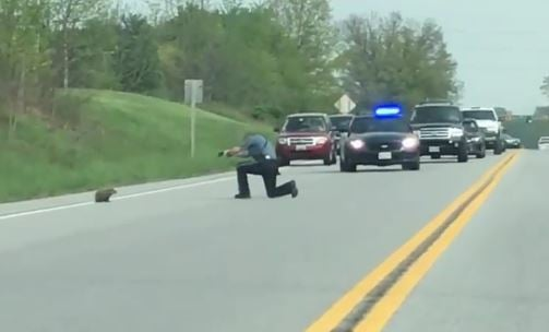 Deputy stops traffic to shoot 'strange' groundhog that was crossing the road
