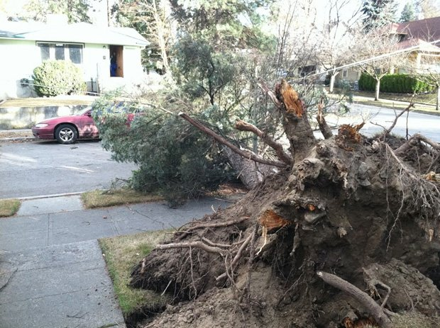 Winds knocked over this tree at 14th and Ash on Wednesday (Photo: KHQ)
