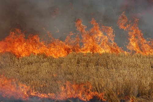 The Idaho Department of Environmental Quality wants to ease field burning restrictions (Photo From OSU)