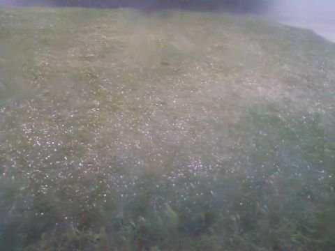 Hillary from Quincy shared this picture of hail falling in her yard Friday afternoon. (Photo uploaded to KHQ.com)