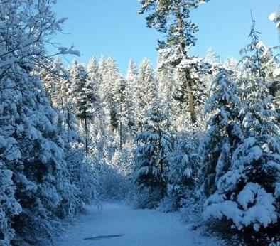 PHOTO From KHQ Viewer Marie Kukula-Tyner In Loon Lake