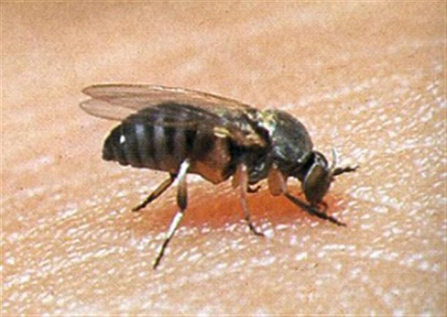 Easy Ways To Avoid Black Fly Bites! - Spokane, North Idaho ... - photo#45