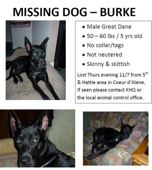 Family dog missing