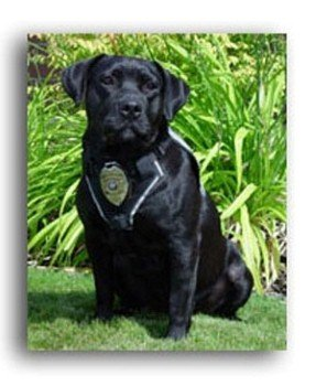 Coeur d'Alene police dog 'Justice' passed away on November 18th 2013 after suffering complications from a surgery. Justice recently retired after 11 years of service.