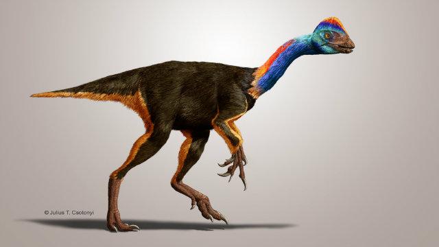 Caenagnathid oviraptorosaur - Credit: Dr. Julius Csotonyi