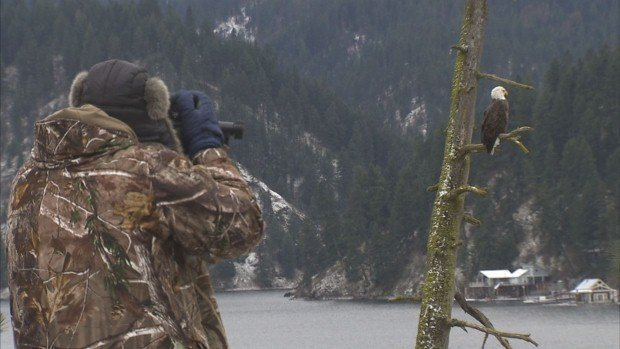 Many people come to photograph the Bald Eagles On Lake Coeur d'Alene in the winter