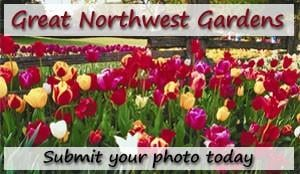 Submit your photo today