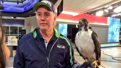 Taima the Official Seattle Seahawk stopped by KHQ Friday night