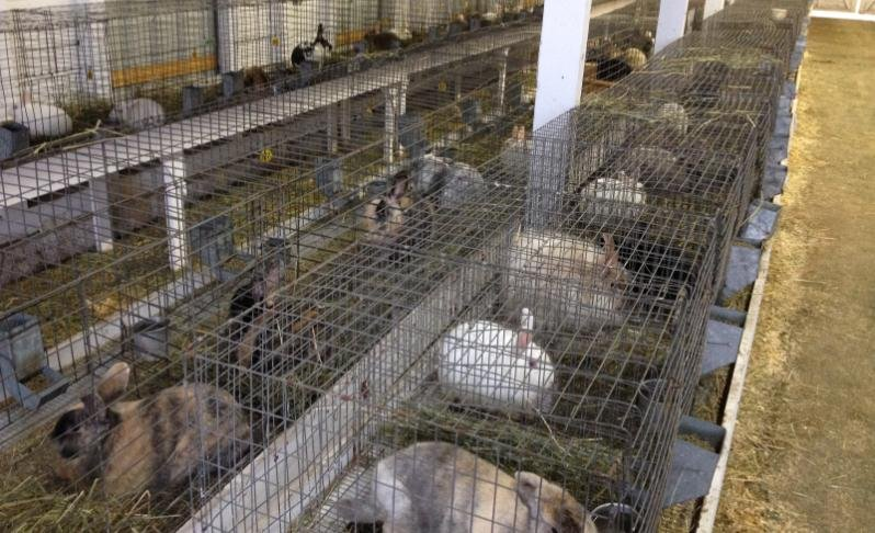 Photo of animals seized