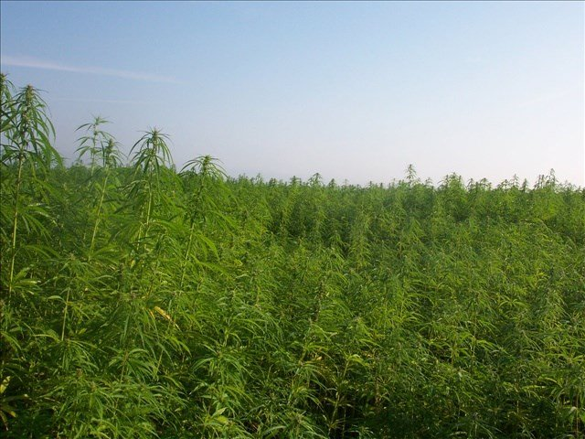 Lawmakers moved a step closer to allowing the state to allow farmers to grow industrial hemp.