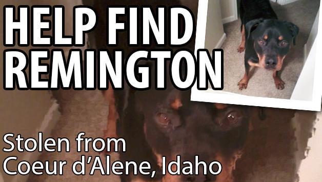 Photo of Rottweiler that was stolen