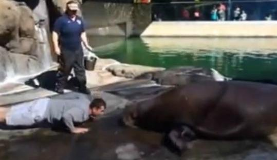 49ers Head Coach Jim Harbaugh did push ups with a Walrus at Six Flags. Seriously. (YouTube)