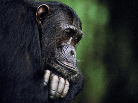 A woman mauled in a 2009 chimpanzee attack has appeared at a hearing to ask Connecticut lawmakers for permission to sue the state for $150 million.