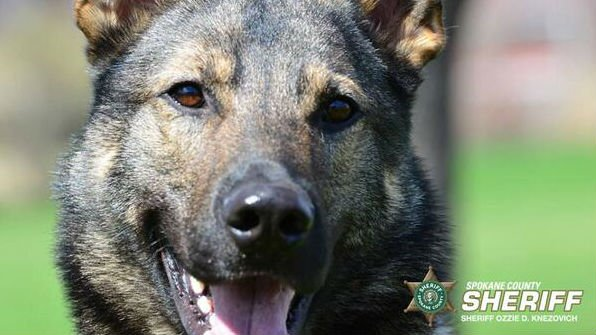 K9 Laslo was attacked by another dog during a burglary call Monday evening