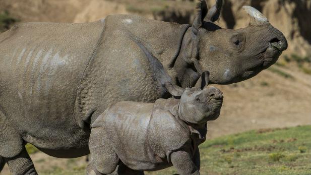 PHOTO COURTESY: San Diego Zoo Safari Park