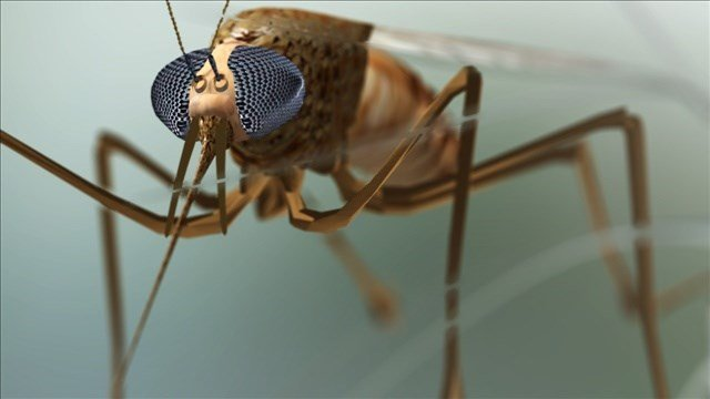 West Nile virus found in mosquitoes in Yakima County